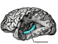 200px-gray739-emphasizing-hippocampus
